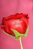 Red rose with I Love You printed on it Stock Photo