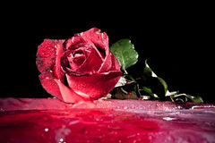 Red rose on ice Royalty Free Stock Images