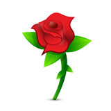 Red rose illustration design Stock Images