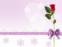 Red Rose In A Gift Royalty Free Stock Photography