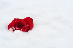 Free Red Rose In Snow Stock Photo - 17162030