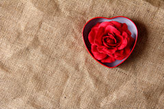 Red rose in iron box Stock Images