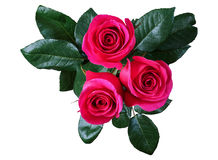 Red rose, isolate Stock Image