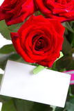 Red rose isolated  on Holiday Stock Photo