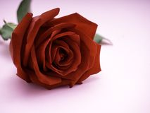 Red rose isolated on pink background stock images