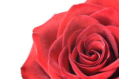 Red rose isolated on white Royalty Free Stock Photos