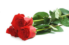 Red rose isolated on white Royalty Free Stock Image