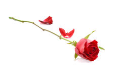 Red rose isolated on white background. Single red rose isolated on white background royalty free stock photos