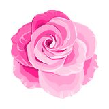 Red rose. Red rose isolated on white background. Vector illustration Stock Photography