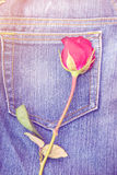 Red rose on jeans fabric background Stock Image
