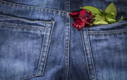 Red rose in jeans pocket Stock Images