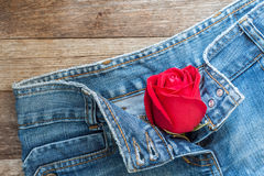 Red rose and jeans Stock Photos