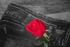 Red rose and jeans Stock Images
