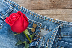 Red rose and jeans Stock Photo
