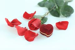 Red rose, jewelry and petals on white background Stock Photos