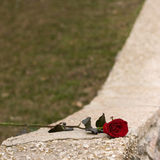Red rose and kerb Stock Images
