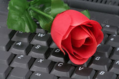 Red rose and keyboard Stock Photo