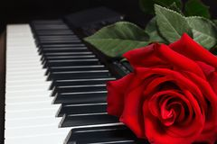 Red rose on keyboard of the digital piano on black background Royalty Free Stock Image