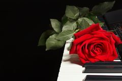 Red rose on keyboard of the electronic piano on black background Royalty Free Stock Images