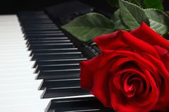 Red rose on keyboard of the electronic synth on black background Royalty Free Stock Image