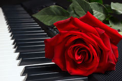 Red rose on keyboard of the electronic synthesizer on black background Stock Images