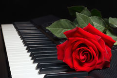 Red rose on keyboard of the synth on black background Stock Photography