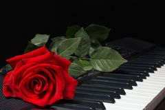 Red rose on keyboard of the synthesizer on black background Stock Images