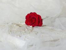 Red rose lays on a photo album. The beautifull red rose lays on a photo wite album royalty free stock photo