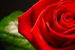 Red rose and leaf 1 Stock Photos