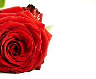 Red rose with leaves Stock Images