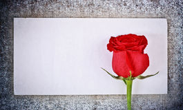 Red Rose and Letter Royalty Free Stock Photography