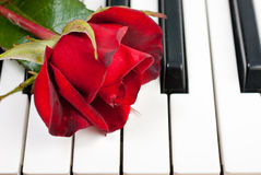 Red rose lies on the piano Stock Photography