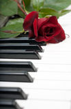 Red rose lies on the piano Royalty Free Stock Photography