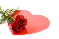 Red rose with love. In my heart Stock Photos