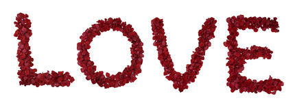 Red rose love Stock Photo