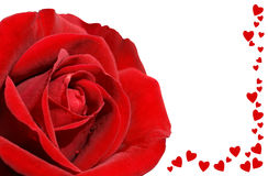 Red rose and love on black Stock Photography