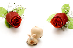 Red rose with luck pig Stock Image