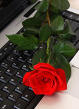 Red rose lying on computer. Keyboard represent long distant love stock photo