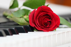 Red rose lying on piano