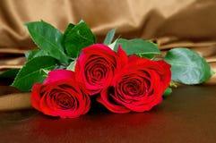 Red rose lying on satin fabric closeup Stock Image