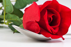 Red rose lying on a silver spoon Royalty Free Stock Image