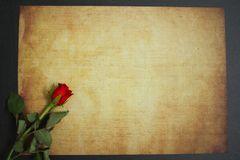 Red rose lying on vintage paper for message. A red flower rose lying on vintage papyrus paper for message royalty free stock photo