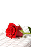 Red rose lying on white keyboard Stock Photos