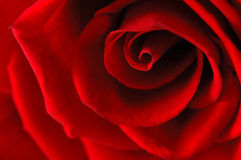 Red rose - macro, abstract Royalty Free Stock Photos