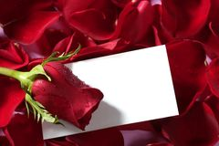 Red rose macro close up with blank note Royalty Free Stock Photo