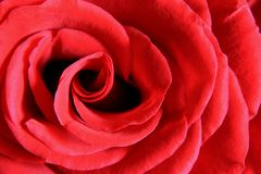 Red Rose Macro 1 Royalty Free Stock Photo