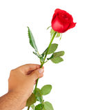 Red rose in a male hand Royalty Free Stock Photos