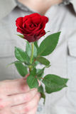 Red rose in mans hand Royalty Free Stock Images