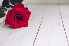 Red rose, marriage proposal, engagement, white wood royalty free stock image