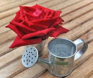 Red rose and metal Royalty Free Stock Photo